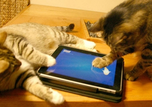 catgame2